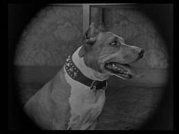 The legendary Luke the Dog