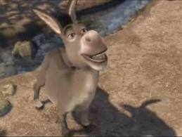 The awesomeness that is Donkey